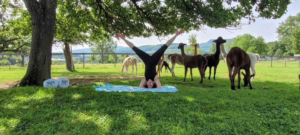 Outdoor-Yoga bei den Alpacas